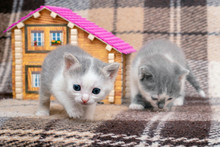 Two Little Kittens Are Playing...