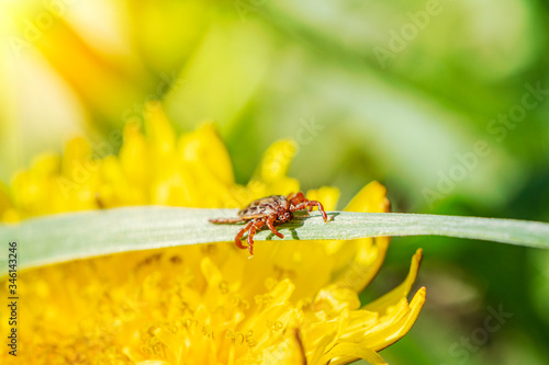 Photo small brown tick sits on the grass in the bright summer sun during the day