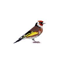 Thrush Bird Illustration. Bird...