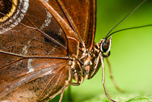 Butterfly On Leaf, Photo As A ...