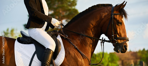 Fototapeta Girl equestrian rider riding a beautiful horse  in the rays of the setting sun. Horse theme obraz