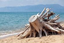 Tronco, Mare, Spiaggia, Panora...