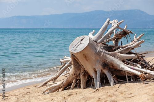 tronco, mare, spiaggia, panorama, sardegna Canvas Print