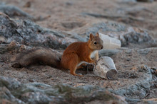 Cute Little Squirrel With Plas...