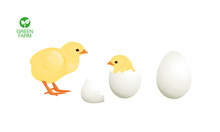 Easter Chicken Hatched From An...