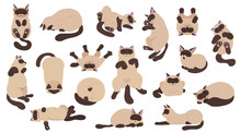 Sleeping Cats Poses. Flat Colo...