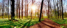 Forest Panorama In Spring With...