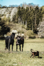 2 Pferde Auf Einer Koppel Beob...