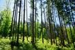 canvas print picture - Wald Licht und Schatten