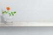Beautiful rose plant on vase (pot) isolated on white
