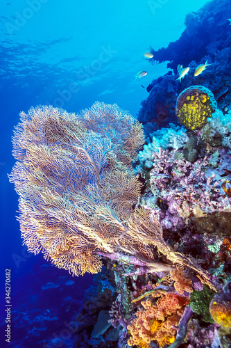 large soft coral on a reef