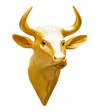 Golden Oxen Head Isolated White Background