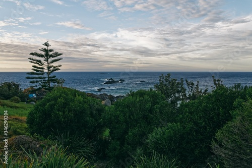 Breathtaking scenery of beautiful greenery by the sea in Sydney, New South Wales, Australia