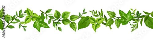 Fotografía Vector horizontal seamless border with various green leaves.