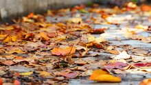 Fallen Leaves On Ground During Autumn