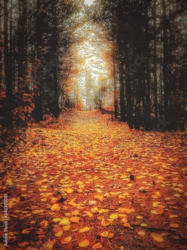 Fototapety, obrazy: Autumn Leaves Fallen On Street In Forest