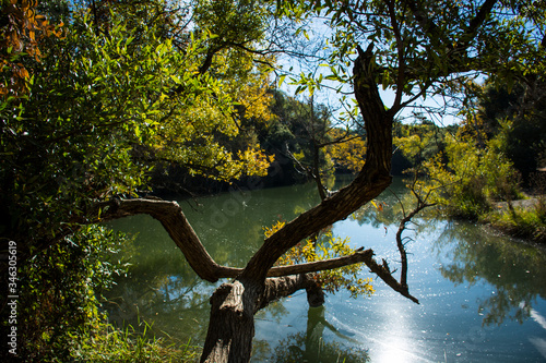 Photo Trees Growing By Anderson Lake