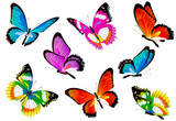 Fototapeta Motyle - butterfly585
