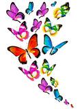 Fototapeta Buterfly - butterfly583