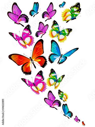 butterfly583