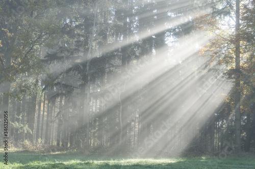 Sunbeams Falling On Trees At Park