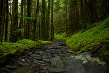 Moss Encroaching On Trail