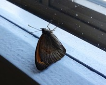 Close-up Of Butterfly On Bench During Snowfall