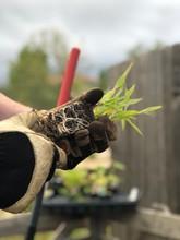 Glove Hands Earth Soil Roots Garden Plant Grow Rake Garden Plant