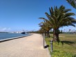 Palm Trees On Footpath By Sea Against Clear Sky