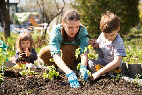 Mom and two kids planting seedling In ground on allotment in garden Canvas Print