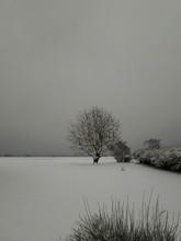 Tree In Snowy Field