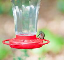 Close-up Of Hummingbird On Bird Feeder