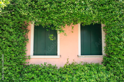 Fotografía Windows Amidst Ivies Growing On House