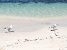 Pair Of Gulls On White Sandy Sea Shore