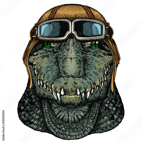 Photo Alligator