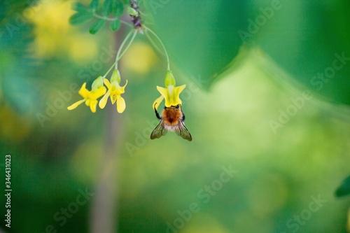Fototapeta Close-up Of Insect On Flower obraz na płótnie