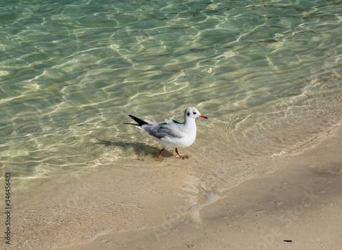 travel, walk, vacation, city, coast, Persian, Gulf, water, glare, reflection, da Canvas Print