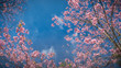 canvas print picture Low Angle View Of Blooming Tree Against Sky