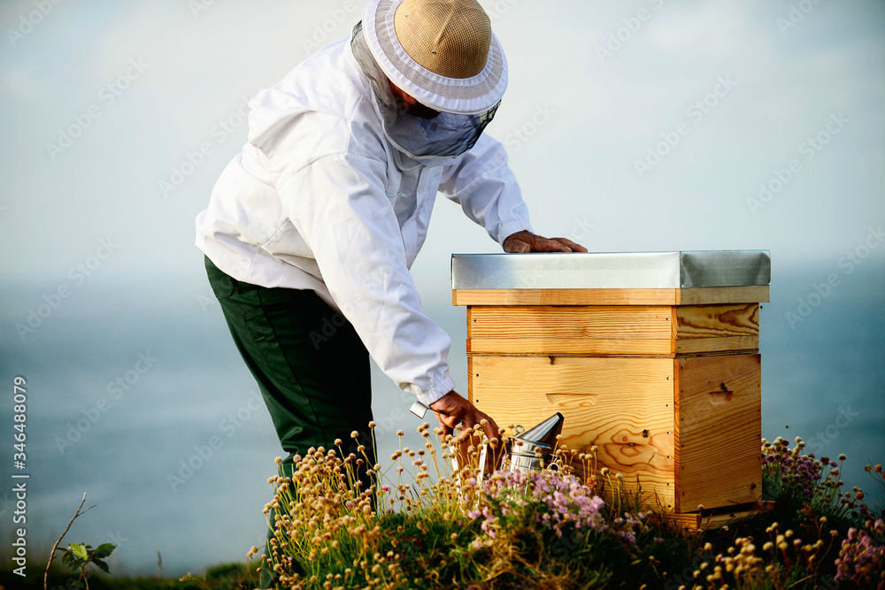 Fototapeta Beekeeper checking his bees in bee-house. Beekeeper holding frame of honeycomb with working bees.