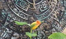 Close-up Of Yellow Rose Against Mayan Calendar