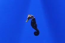 Close-up Of Sea Horse