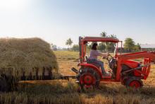 Asian Woman Farmer Driving A T...