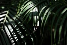 Green Palm Leaf With Sun Light...