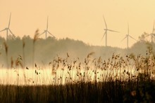 Plants On Field Against Windmills During Sunset