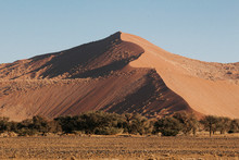 Mountainous Sand-dunes And Camelthorn Acacia Trees In The Namib Desert