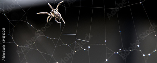 Photo Close-up Of Spider On Web At Night