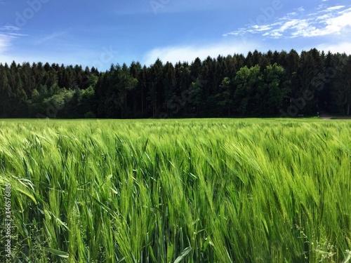 Crops Growing On Field Against Sky Fotobehang