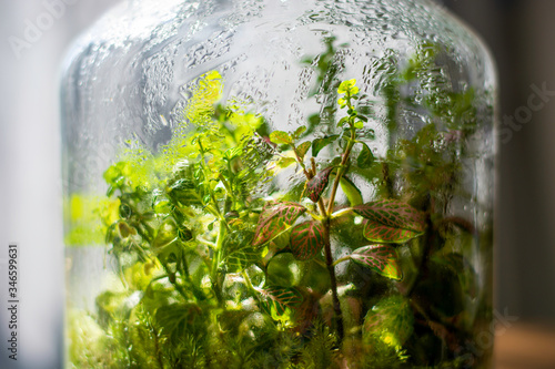 Photo Plants in a closed glass bottle