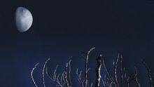 Half-moon On Clear Night Sky