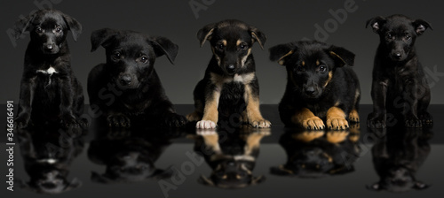 Canvas Print Panoramic Portrait Of Puppies Against Black Background